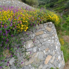 flore-mur
